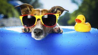 Care sunt adevaratele motive pentru care medicii recomanda ochelarii de soare
